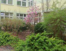 Ogródek przy budynku SP321